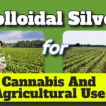 Image is the featured image for this article about colloidal silver for agriculture use.