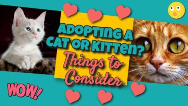 "Image text: ""Adopting a cat or kitten""."