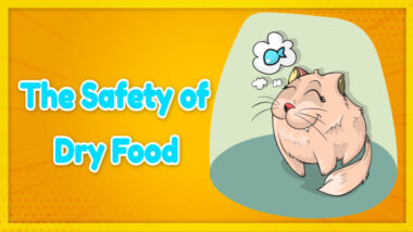 dafety-of-dryed-food-1024x576-1