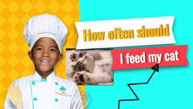 how-often-should-I-feed-my-cat-1024x576-1