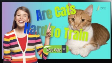 Are-Cats-hard-To-train-read-more-1024x576-1