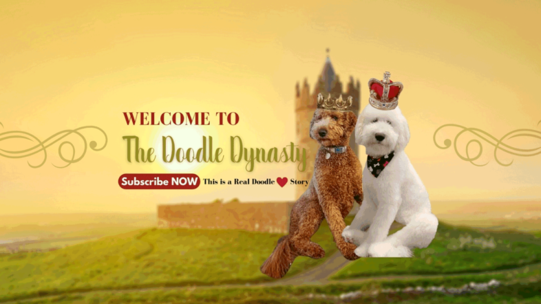 """Image text: """"Labrodoodle doodle dynasty""""."""