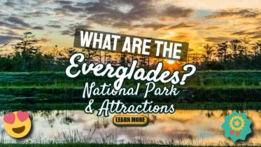What-are-the-Everglades-1