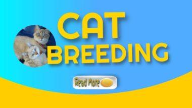 cat-breeding-1024x576-1