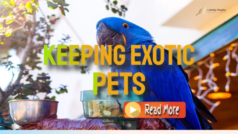 keeping-Exotic-pets-1024x576-1