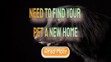 need-to-find-your-pet-a-new-home-1024x576-1