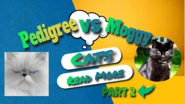 pedigree-VS-moggy-part-2-1024x576-1