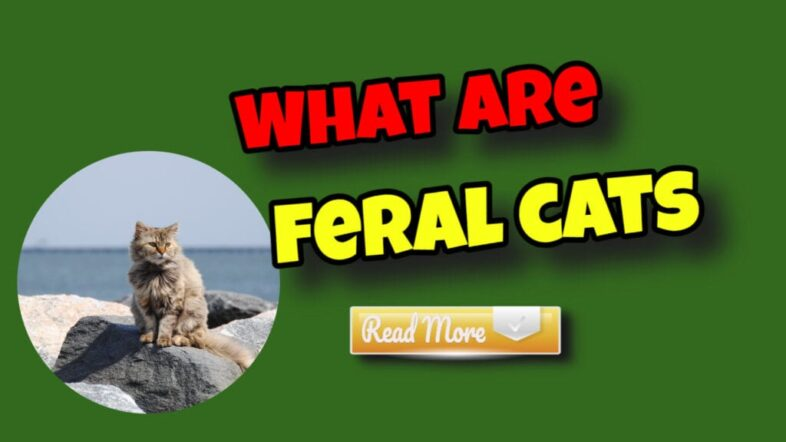 what-are-feral-cats-read-more-1024x576-1