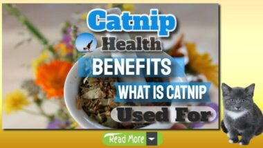 catnip-health-benefits-banner-1024x576-1