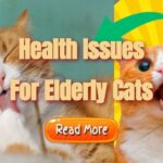 """Image text: """"Health issues for elderly cats""""."""