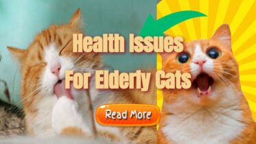 "Image text: ""Health issues for elderly cats""."