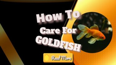 how-to-care-for-goldfish-banner-1024x576-1